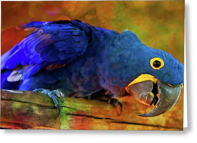 Art Loving Blue Macaw Greeting Card