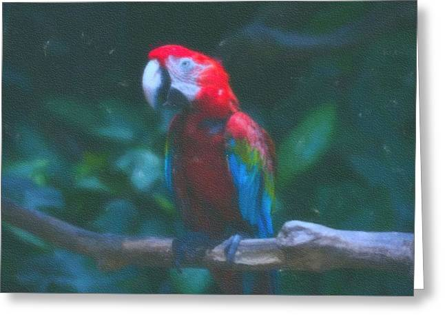 art Macaw 1 Greeting Card