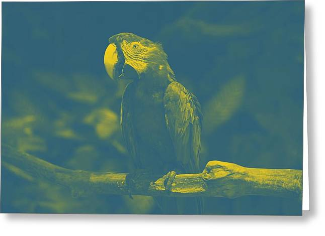 art Macaw 2 Greeting Card