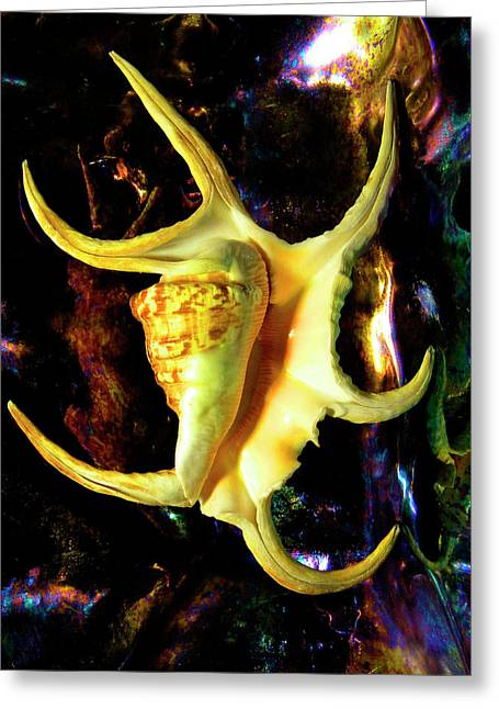 Frank Ocean Greeting Cards - Arthritic Spider Conch Seashell Greeting Card by Frank Wilson
