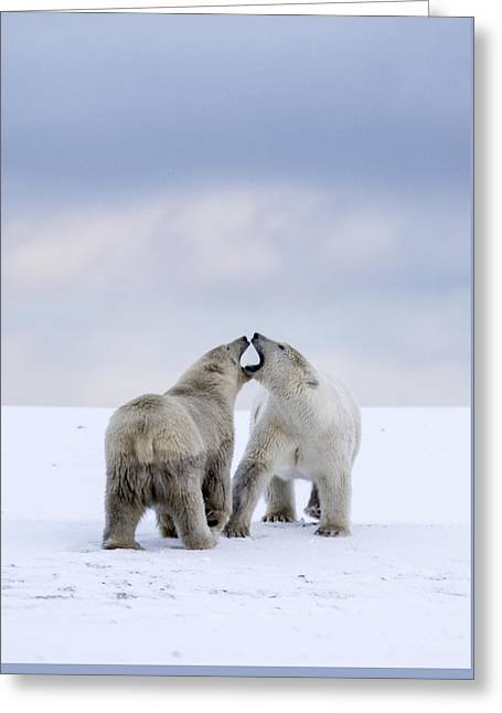 Artic Antics Greeting Card