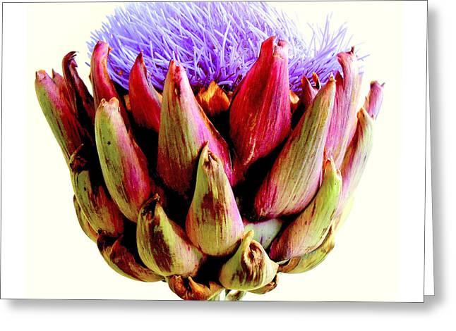 Artichoke In Bloom Greeting Card