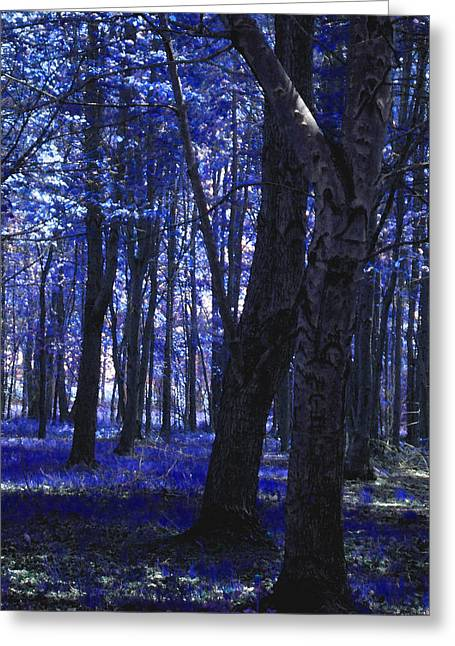 Greeting Card featuring the photograph Artistic Tree In Blue by Michelle Audas