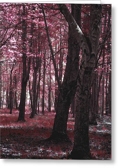 Greeting Card featuring the photograph Artistic Tree In Pink by Michelle Audas