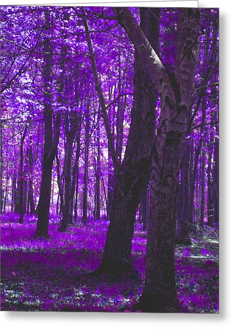 Greeting Card featuring the photograph Artistic Tree In Purple by Michelle Audas
