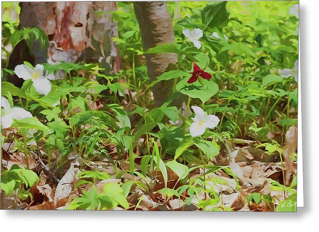 Artistic Trilliums Greeting Card