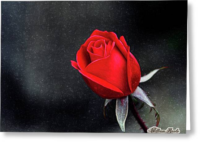 Artists Red Rose Greeting Card by William Havle