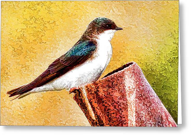 Male Tree Swallow No. 2 Greeting Card by Bill Kesler