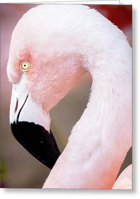 Greeting Card featuring the photograph The Flamingo, Animal Decor, Nursery Decor, Flamingo Gifts, Flamingo Phone Case,  by David Millenheft