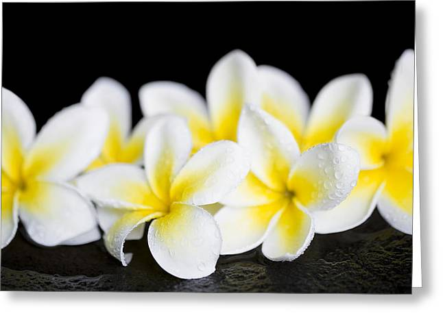 Greeting Card featuring the photograph Plumeria Obtusa Singapore White by Sharon Mau