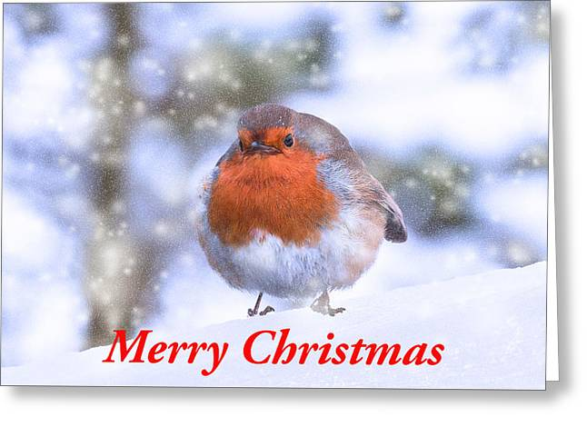 Greeting Card featuring the photograph Christmas Robin by Scott Carruthers