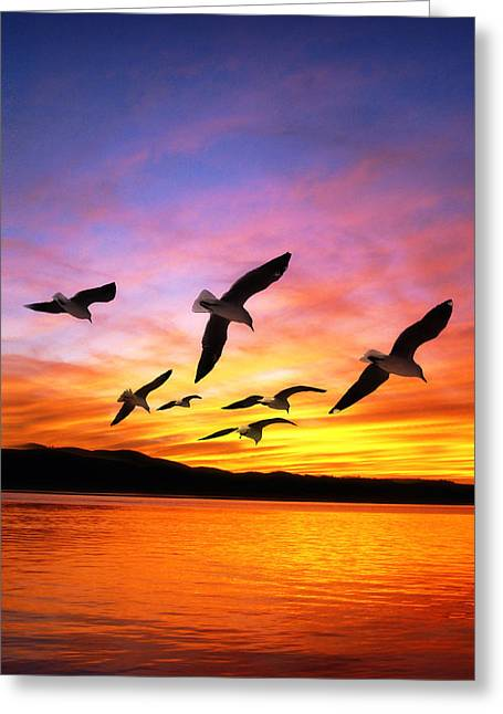 Seagull Sunset   Greeting Card by Gravityx Designs