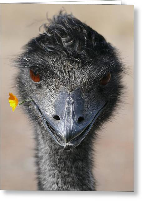 Happy Emu Greeting Card