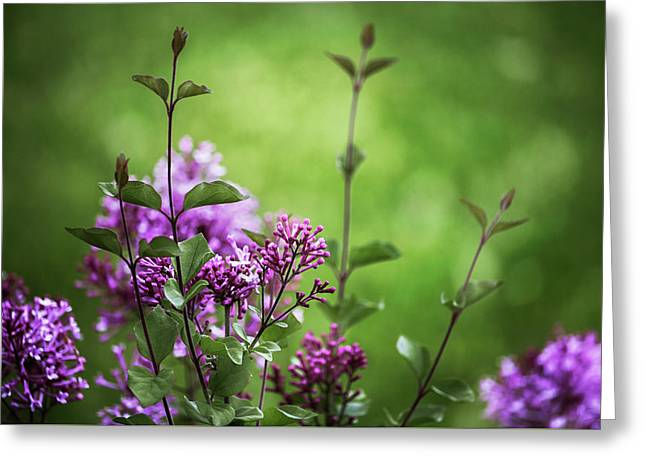 Lilac Memories Greeting Card by Karen Casey-Smith