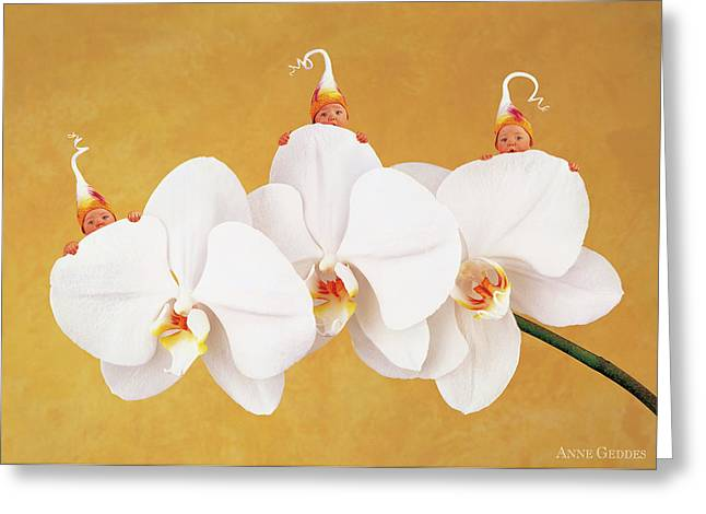 Moth Orchid Greeting Card by Anne Geddes