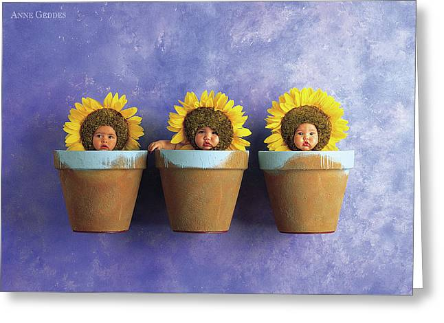 Sunflower Pots Greeting Card