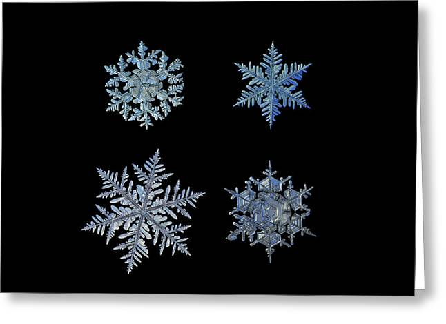 Four Snowflakes On Black Background Greeting Card by Alexey Kljatov