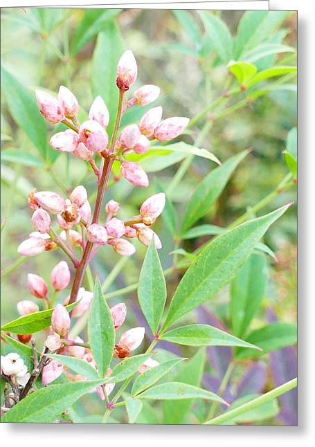 Pale Powder Pink Plant Greeting Card