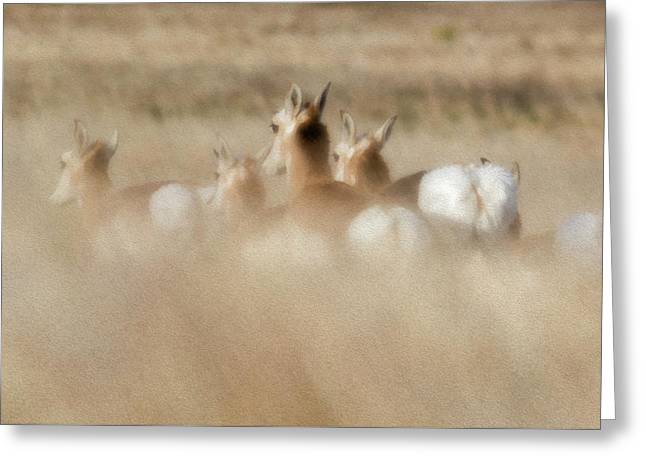 Pronghorn On The Run Greeting Card