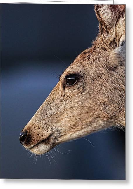 Muley Headshot Greeting Card