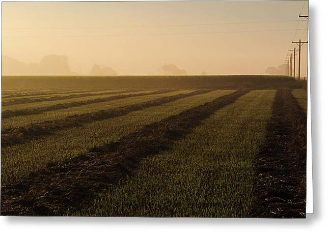 Foggy Morning Windrows Greeting Card