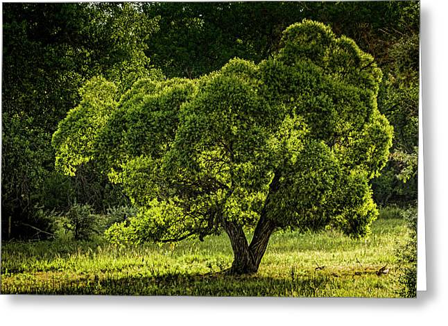 Backlit And Green Greeting Card