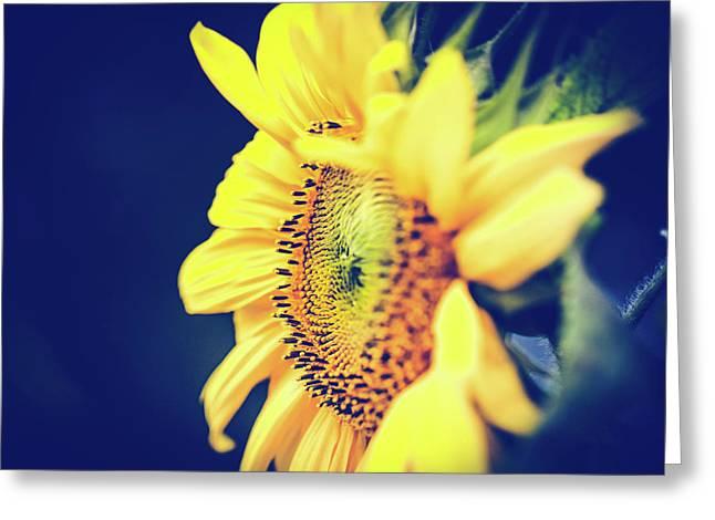 Starflower Greeting Card by Sharon Mau