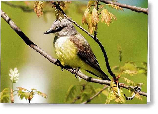 Western Kingbird - Artistic Greeting Card