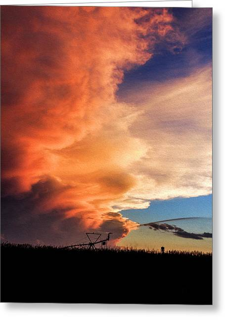 One Tall Sunset Greeting Card