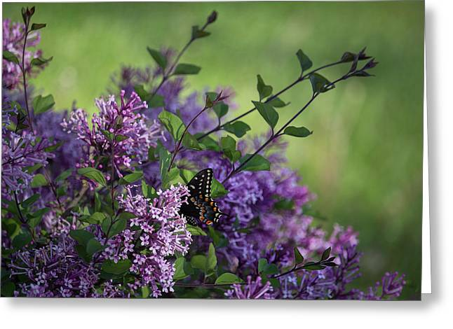 Lilac Enchantment Greeting Card by Karen Casey-Smith