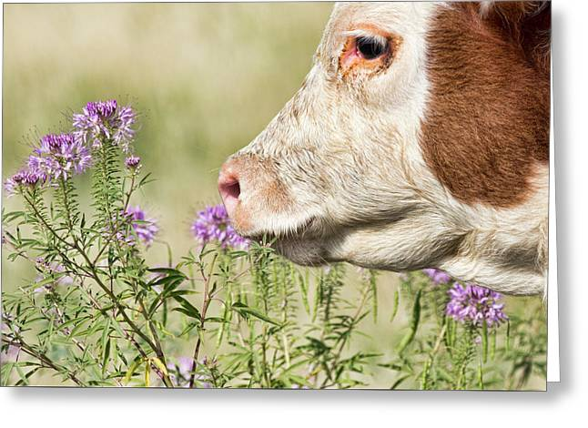 Stop And Smell The Thistle Greeting Card
