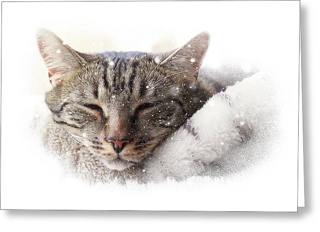 Cat And Snow Greeting Card