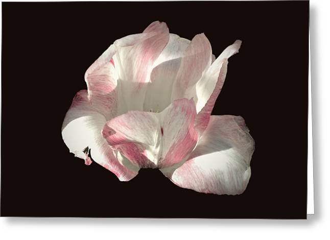 Greeting Card featuring the photograph Pretty In Pink by Photographic Arts And Design Studio