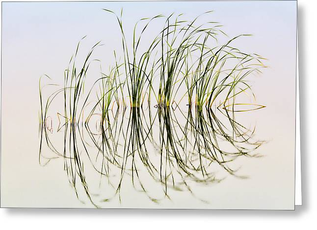 Graceful Grass Greeting Card