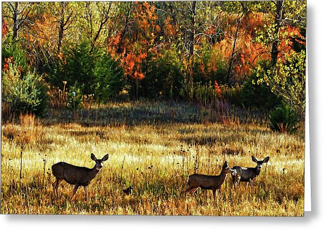 Deer Autumn Greeting Card