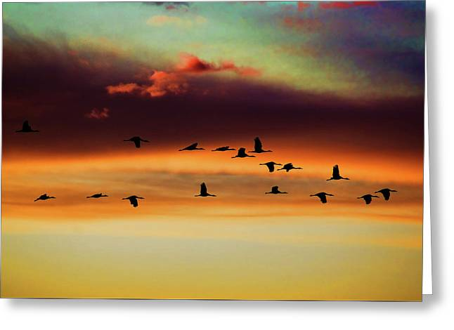 Sandhill Cranes Take The Sunset Flight Greeting Card