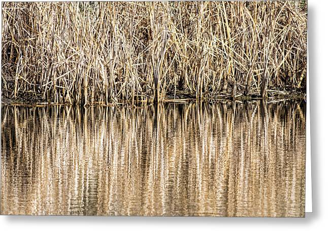 Golden Reed Reflection Greeting Card
