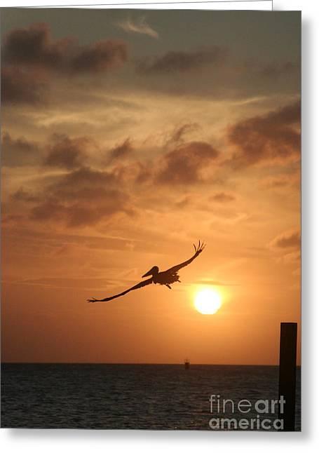 Aruba Pelican II Greeting Card by Paula Deutz