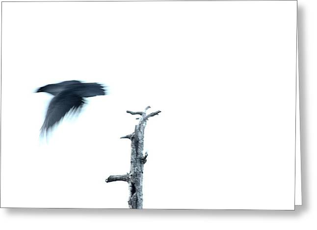 As The Crow Flies Greeting Card by Kreddible Trout