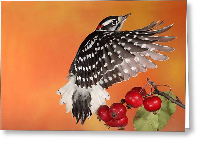 Woodpecker Greeting Cards - Ascending to New Heights Greeting Card by Gerry Sibell