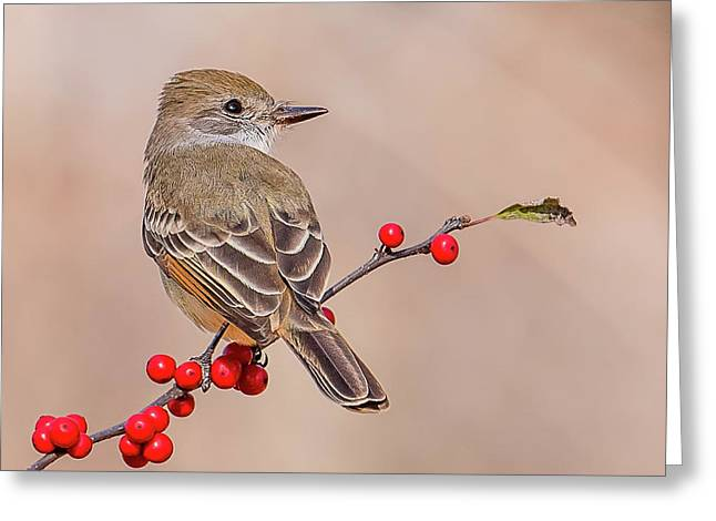 Ash-throated Flycatcher On A Branch Greeting Card