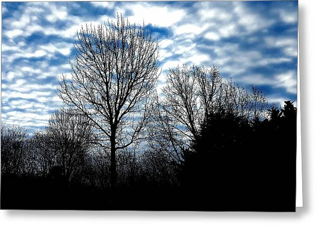 Ash Trees Against A Mackerel Sky Greeting Card