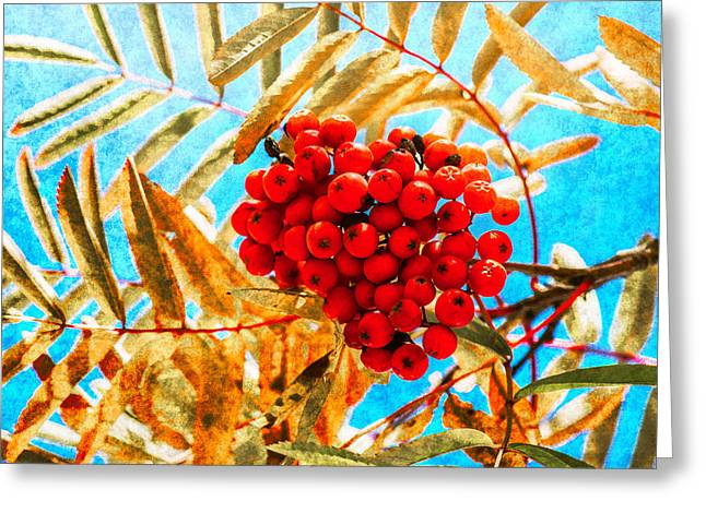 Ashberry Greeting Card by Alexander Senin