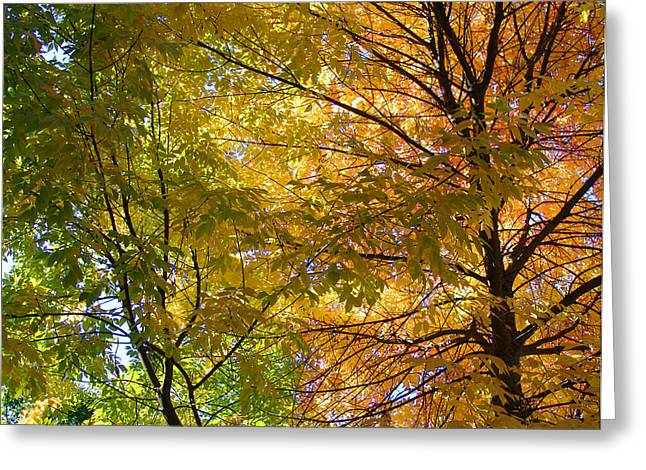 Greeting Card featuring the photograph Ashland Autumn by John Norman Stewart