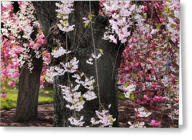 Asian Cherry In Bloom Greeting Card