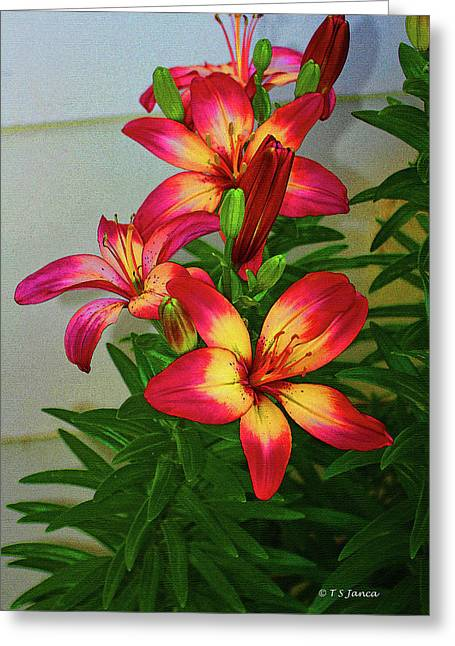 Asian Lilly Spring Time Greeting Card