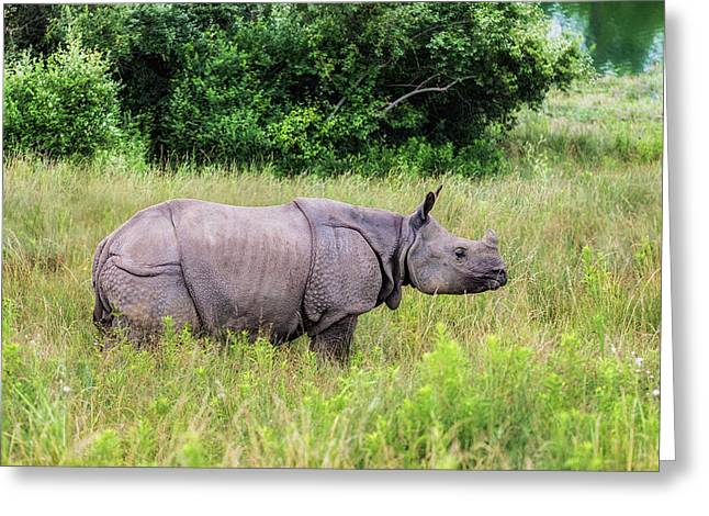 Asian Rhinoceros Greeting Card