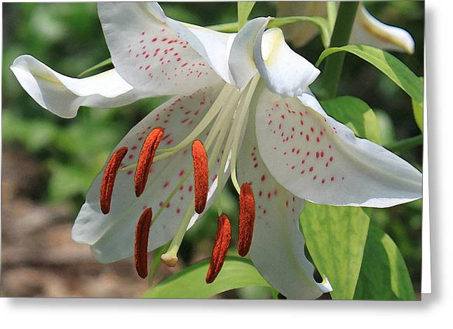 Asiatic Lily Greeting Card by Suzanne Gaff