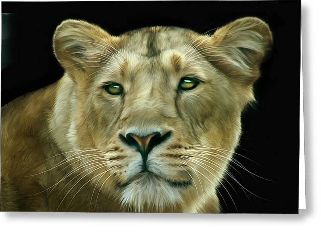Asiatic Greeting Cards - Asiatic Lioness Greeting Card by Julie L Hoddinott