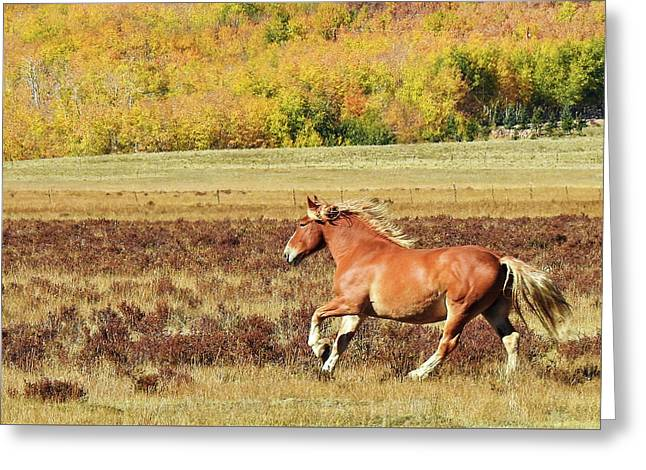 Aspen And Horsepower Greeting Card
